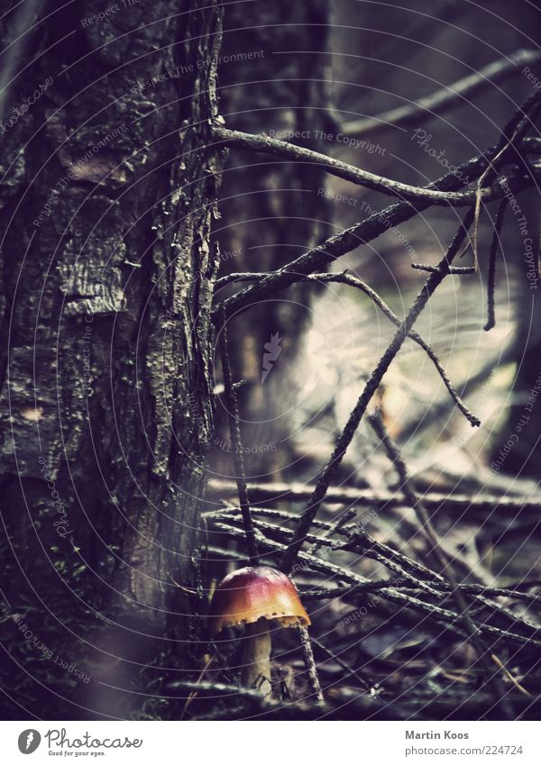 Nature Tree Plant Forest Dark Fresh Protection Creepy Mushroom Poison Twigs and branches Mushroom cap Undergrowth Enchanted forest Inedible Impassable