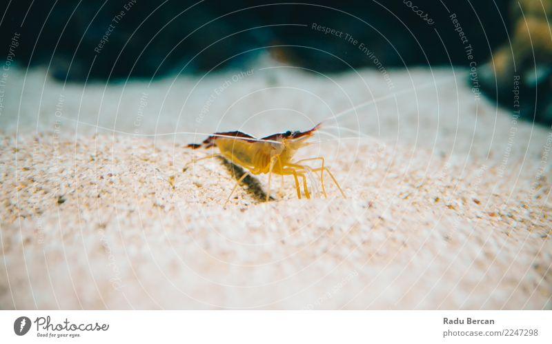 Underwater Closeup Of Shrimp Nature Animal Water Wild animal Aquarium 1 Discover Multicoloured Yellow Orange Underwater aquarium Underwater photo Close-up