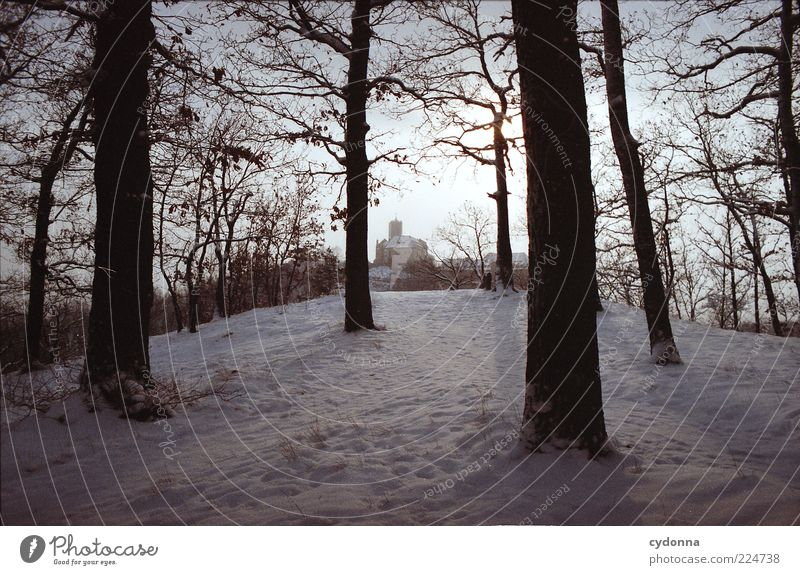 Wartburg view Far-off places Environment Nature Landscape Winter Ice Frost Snow Tree Forest Loneliness Discover Relaxation Mysterious Idyll Life Nostalgia Calm