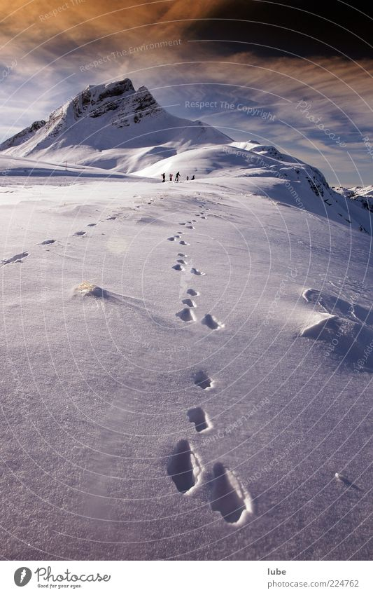 hare trail Vacation & Travel Tourism Winter Snow Mountain Nature Landscape Beautiful weather Rock Alps Peak Snowcapped peak Animal tracks Footprint Relaxation