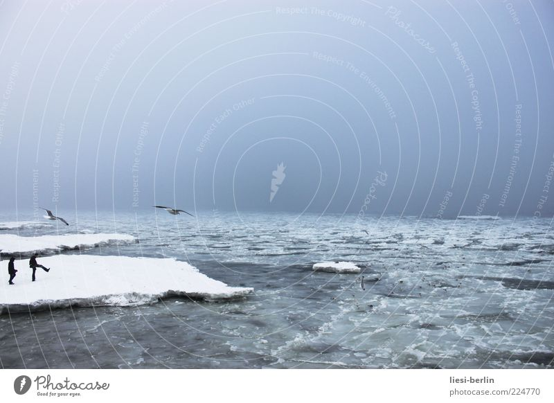 Baltic plaice Human being Life 2 Nature Landscape Elements Water Sky Winter Ice Frost Snow Waves Coast Beach Bay Baltic Sea Ocean Movement Seagull Colour photo