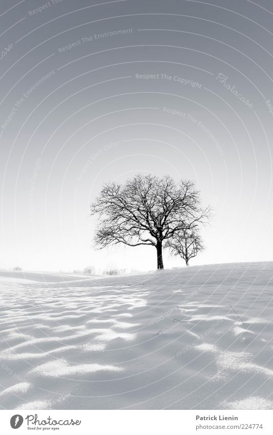 White Winter Hymnal Environment Nature Landscape Plant Elements Air Sky Cloudless sky Climate Weather Beautiful weather Ice Frost Snow Tree Hill Bright Cold