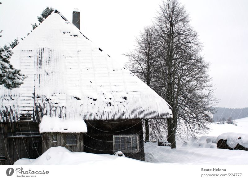 White Tree Calm Loneliness Black House (Residential Structure) Cold Snow Past Snowscape Tradition Bleak Cliche Remote Winter vacation Characteristic
