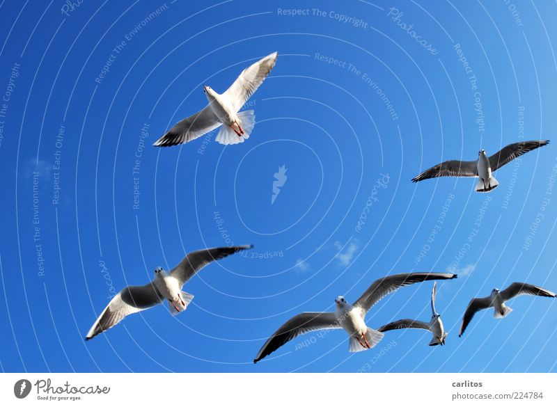 Sky White Blue Animal Freedom Above Wind Flying Esthetic Feather Group of animals Wing Seagull Beautiful weather Hover Attachment