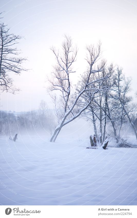 Icy fog Environment Nature Landscape Winter Fog Snow Tree River bank Cold Natural Beautiful White Bleak Covered Snowscape Deserted Copy Space top