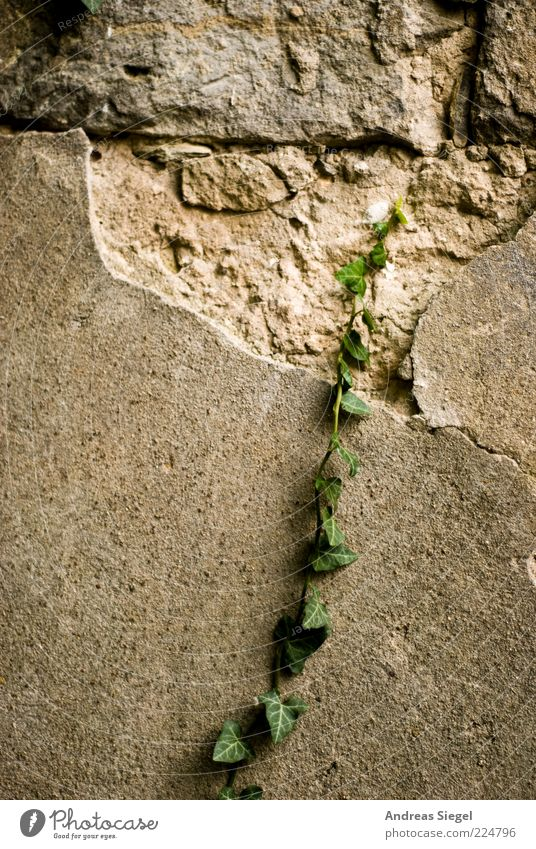 Nature Plant Wall (building) Environment Wall (barrier) Facade Growth Broken Wild Gloomy Change Transience Derelict Decline Plaster Exotic