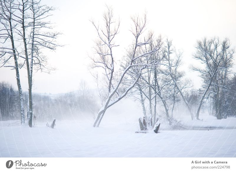 Foggy cold Environment Nature Landscape Clouds Winter Ice Frost Snow Tree River bank Esthetic Authentic Free Gigantic Bright Cold Natural Wild White Bleak
