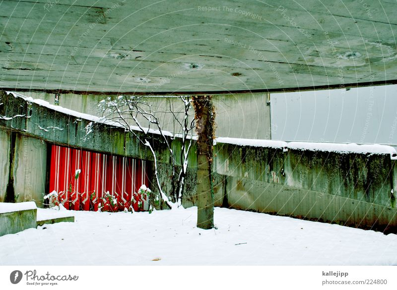 Tree Winter Cold Wall (building) Gray Wall (barrier) Concrete Design Stairs Round Roof Under Tree trunk Weathered Hiding place