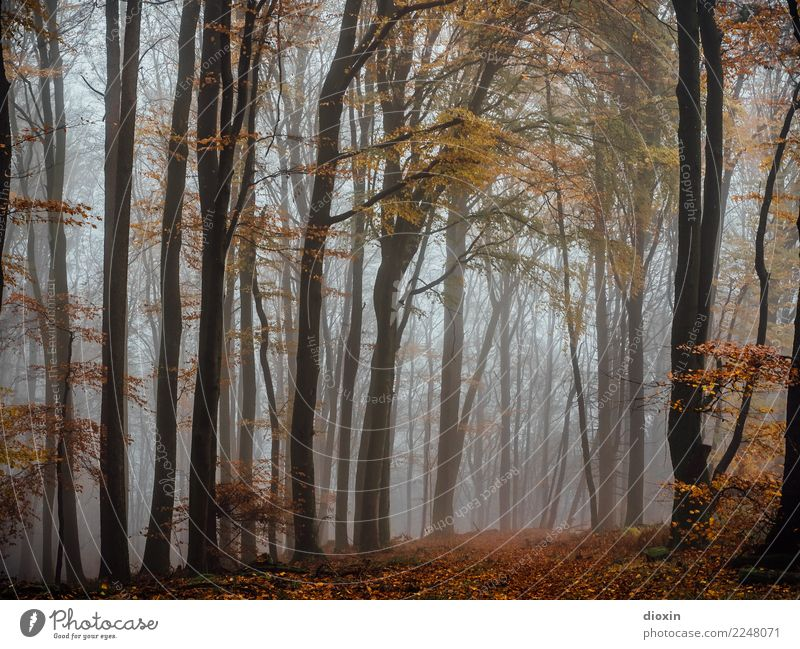 Nature Plant Landscape Calm Forest Winter Mountain Dark Autumn Environment Cold Style Moody Trip Rain Hiking