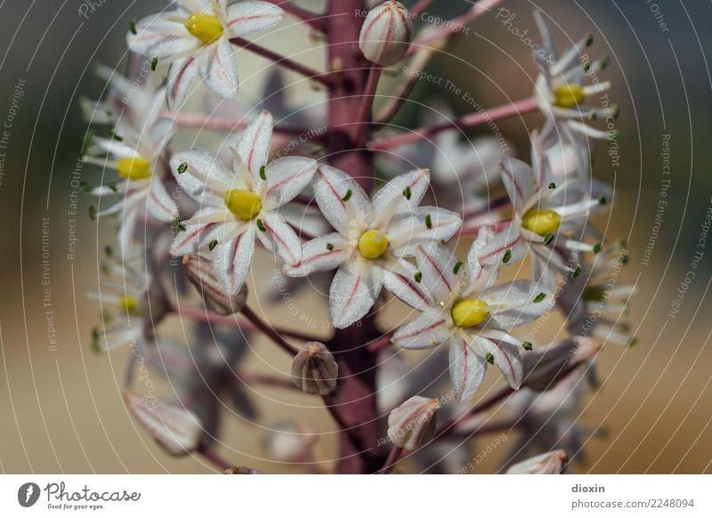 les fleurs de crète Environment Nature Plant Flower Wild plant Island Crete Blossoming Fragrance Natural Beautiful Colour photo Exterior shot Close-up Detail