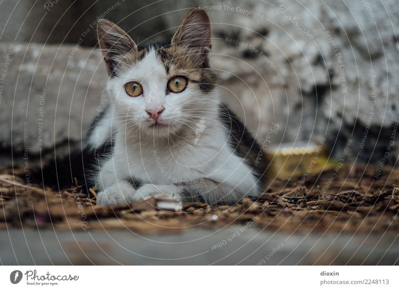 cats of crete Animal Pet Cat 1 Baby animal Beautiful Cuddly Cute Attentive Watchfulness Curiosity Colour photo Exterior shot Deserted Day Shadow Blur