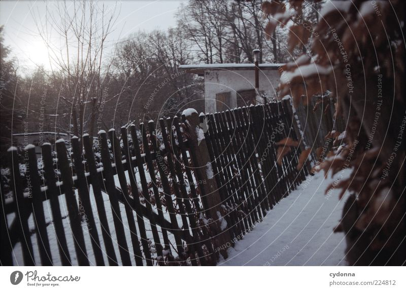 Nature Calm Winter Loneliness Snow Garden Lanes & trails Ice Time Frost Uniqueness Mysterious Hut Garden plot