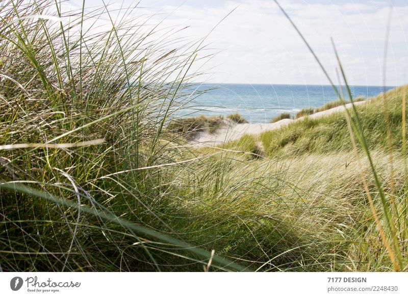 Through the dune Life Relaxation Cure Vacation & Travel Tourism Summer Summer vacation Sun Beach Ocean Environment Nature Landscape Animal Air Grass Waves Coast