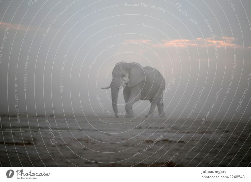 Elephant on the move Vacation & Travel Adventure Far-off places Freedom Safari Expedition Camping Nature Landscape Sand Sky Horizon Gale Animal Wild animal 1