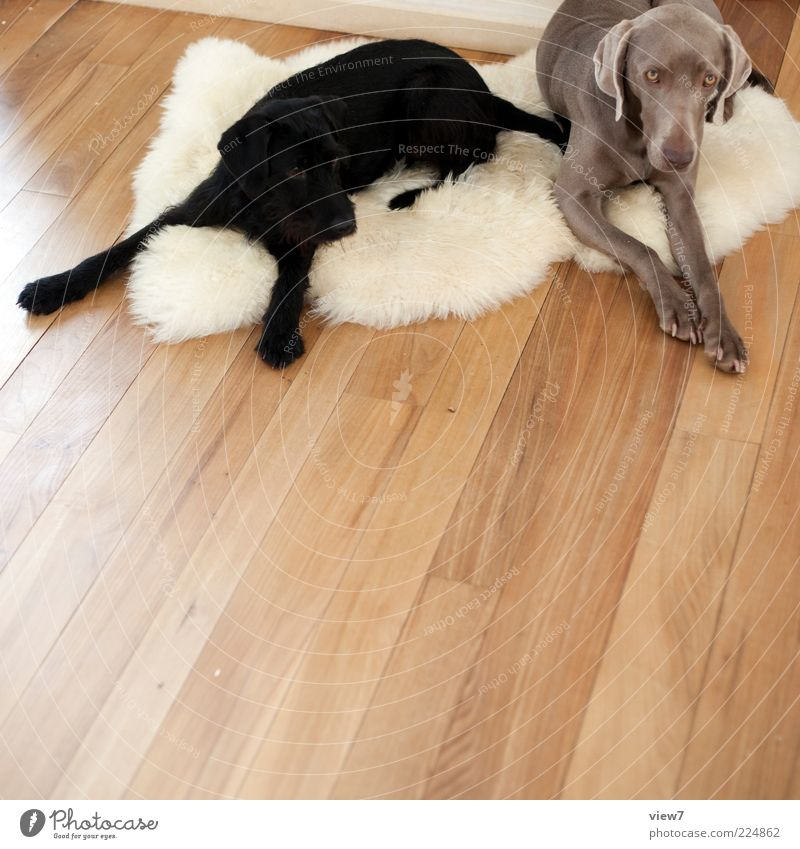 Dog White Colour Relaxation Animal Black Gray Wood Line Lie Moody Brown Pair of animals Authentic Modern Esthetic