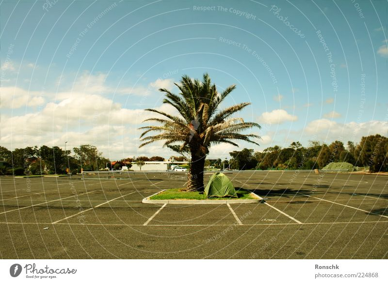 Sky Clouds Happy Places Happiness Asphalt Palm tree Beautiful weather Parking lot Tar Tent Green space Marker line