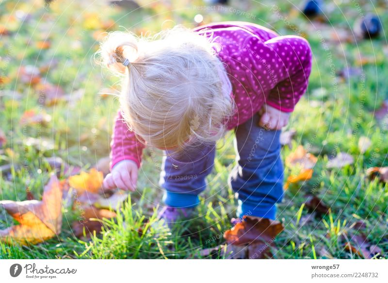 Child Human being Girl Autumn Feminine Discover Toddler Autumn leaves Autumnal 1 - 3 years Adventurer