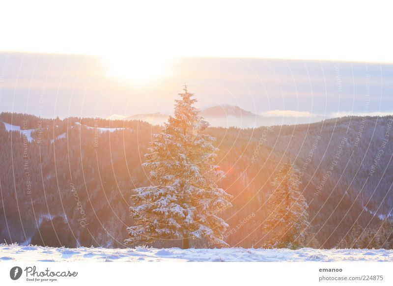 Nature Tree Plant Sun Winter Far-off places Forest Cold Snow Environment Mountain Landscape Bright Weather Ice Esthetic