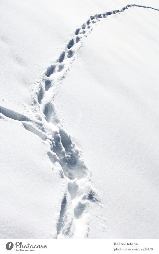 Nature White Winter Snow Environment Landscape Bright Ice Field Glittering Dangerous Frost Mysterious Footprint Freeze Animal tracks