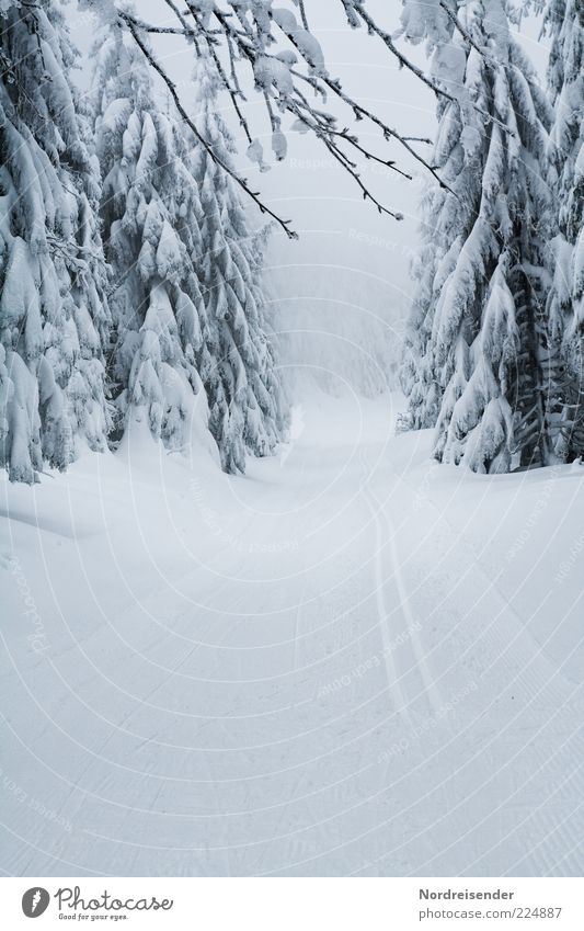 Nature White Joy Winter Loneliness Forest Relaxation Snow Lanes & trails Moody Line Ice Elegant Esthetic Climate Frost
