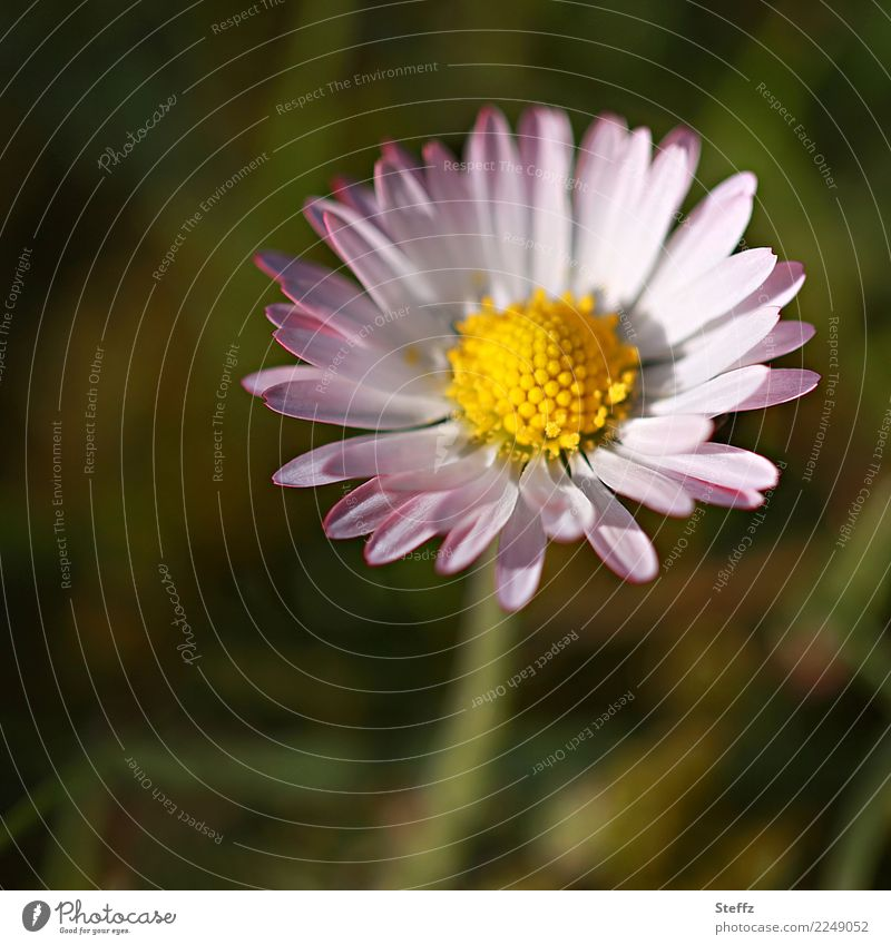 be simple Environment Nature Plant Spring Summer Flower Blossom Wild plant Daisy Blossom leave Spring flower Garden Meadow Blossoming Simple Beautiful Yellow