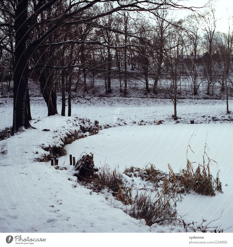 Frozen Trip Environment Nature Landscape Winter Ice Frost Snow Tree Meadow Pond Loneliness Uniqueness Relaxation Stagnating Transience Change Lanes & trails