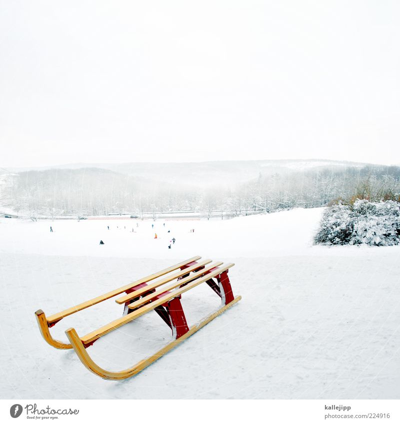 Human being White Winter Cold Wood Playing Leisure and hobbies Fog Climate Hill Snowscape Slope Classic Glide Sleigh Snow layer