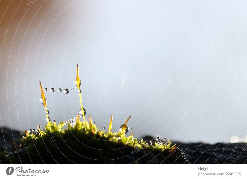 Tension | Mini bead chain Environment Nature Plant Drops of water Autumn Moss Wild plant Park Glittering Illuminate Stand Exceptional Uniqueness Small Wet
