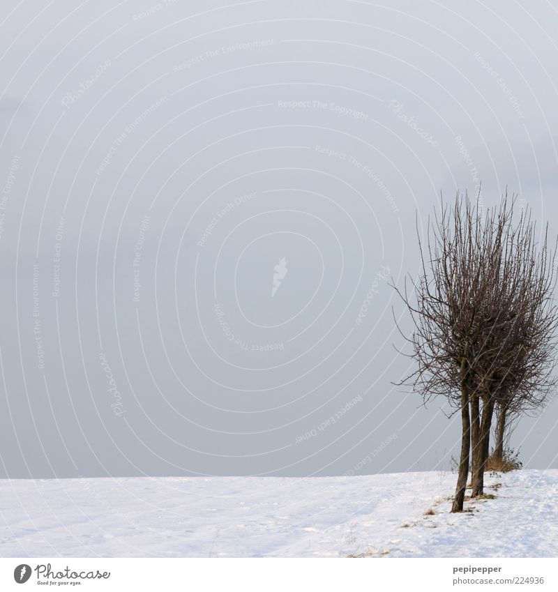 Tree Winter Cold Snow Field Horizon Twigs and branches Leafless Snow layer Gray clouds