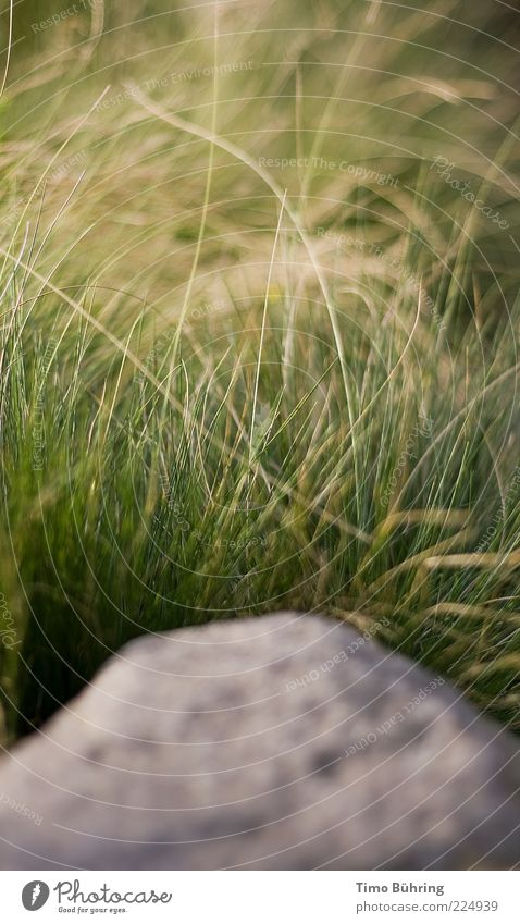 Stone of Wisdom Nature Elements Earth Beautiful weather Grass Bushes Rock Friendliness Fresh Bright Positive Yellow Gray Green Serene Colour photo