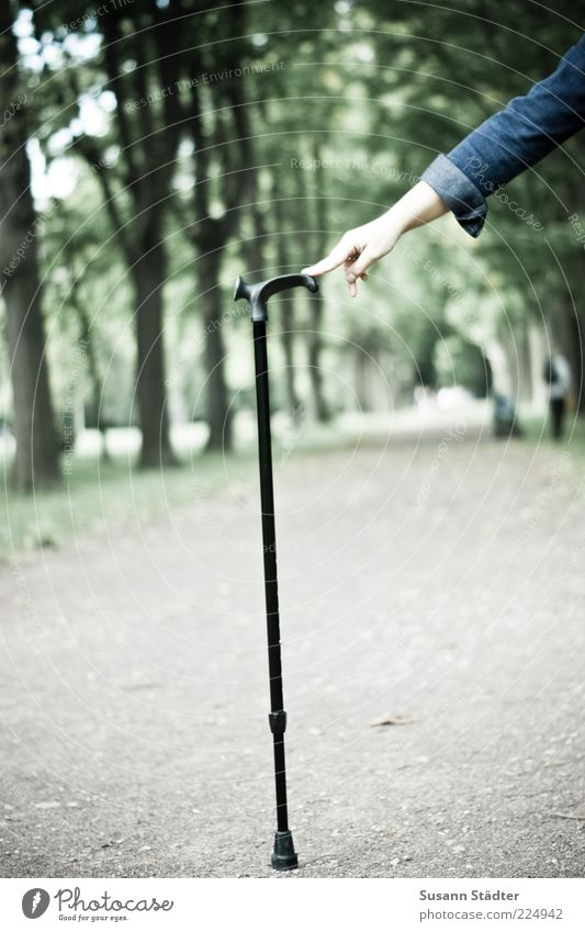 Hand Tree Life Lanes & trails Park Power Going Arm Walking Hiking Fingers Help To hold on Footpath Barrier Walking aid