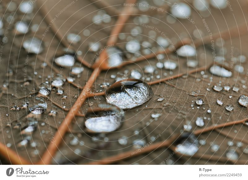 rain drops Life Nature Drops of water Jump sunlight autumn abstract bubble leaf transparent color Liquid fresh freshness shining green garden Background picture