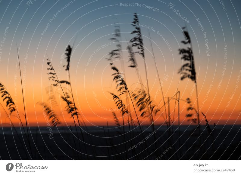 At the end of the day. Nature Landscape Plant Sky Night sky Horizon Sunrise Sunset Summer marram grass Grass Beach Dark Orange Black Sadness Grief Death Idyll
