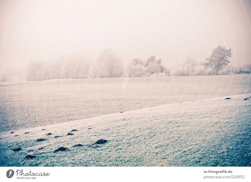 Nature White Green Tree Plant Winter Cold Meadow Snow Landscape Grass Environment Weather Ice Field Horizon