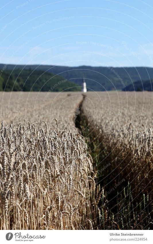 Mr. Pastors Promilleweg Grain Landscape Sky Horizon Summer Plant Agricultural crop Field Lanes & trails Idyll Forest path Cornfield Furrow Church spire Curve