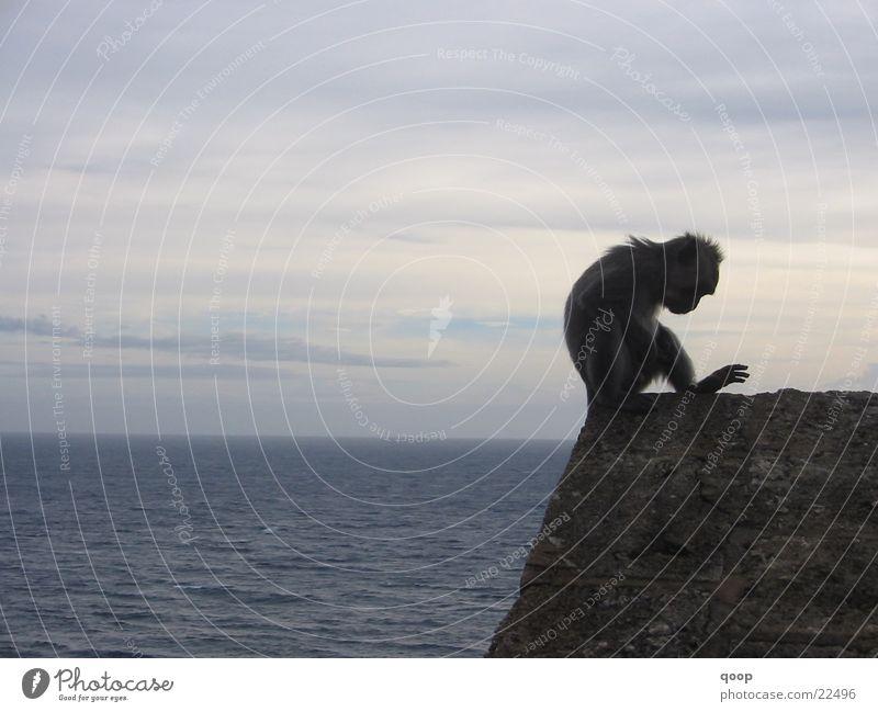 Sky Ocean Clouds Animal Lake Rock Wild Desk Table Monkeys Bali Indonesia Los Angeles