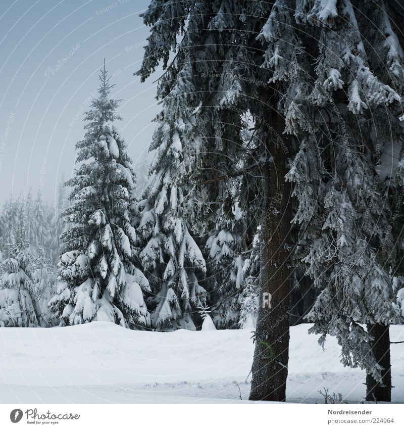 Nature Tree Calm Winter Forest Relaxation Snow Landscape Lanes & trails Moody Ice Climate Characters Frost Sign Fir tree