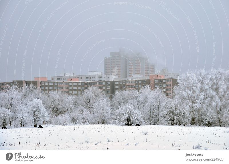 Winter rest on the outskirts of town Sky Bad weather Fog Ice Frost Snow tree Field Marienfelde Outskirts Town house (City: Block of flats) Tower block Facade