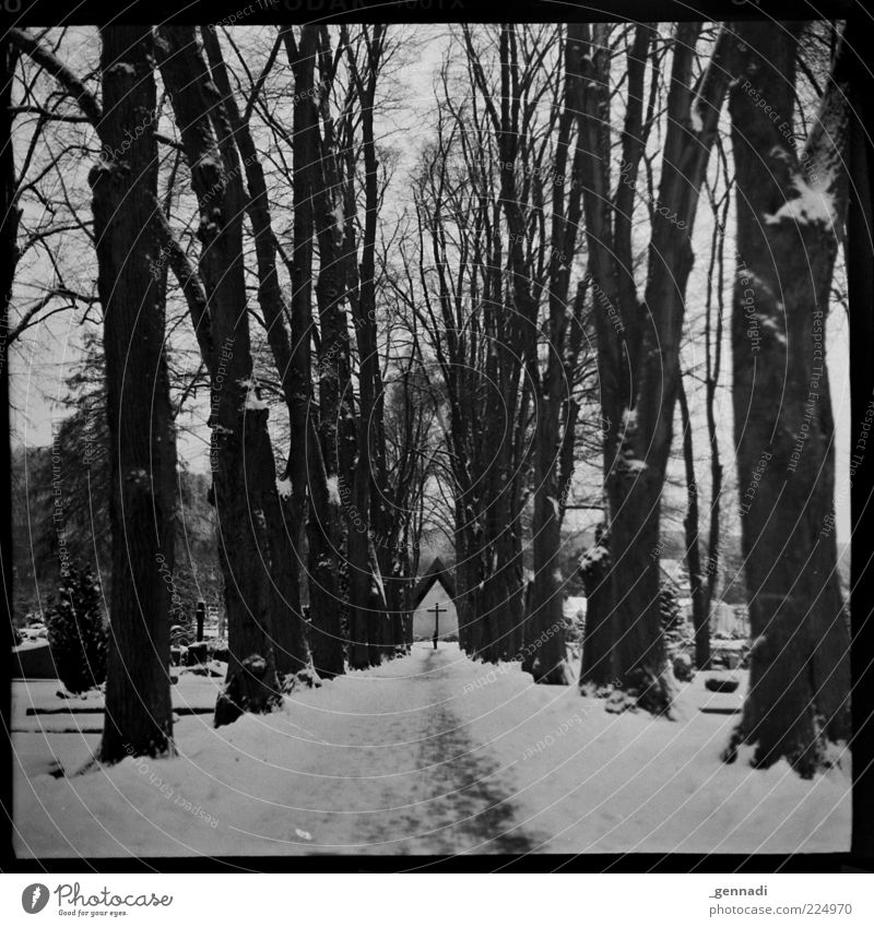 curriculum vitae Environment Landscape Winter Tree Avenue Chapel Cemetery Lanes & trails Dirty Dark Authentic Gloomy Gray Sadness Grief Death Trend-setting