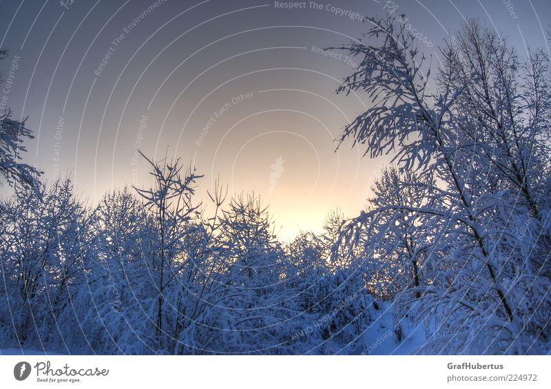 Sky Nature White Tree Blue Plant Calm Winter Forest Cold Snow Environment Ice Climate Frost Bushes