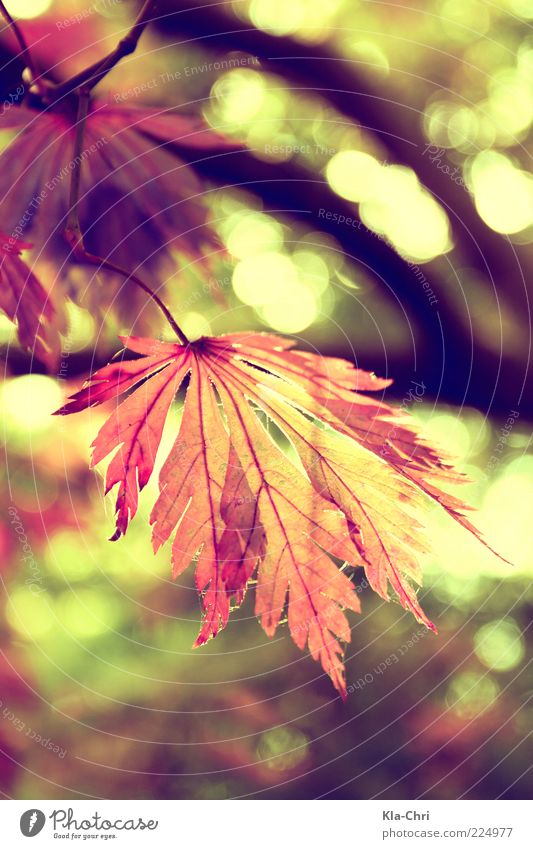 Nature Plant Leaf Calm Autumn Happy Near Stalk Beautiful weather Autumnal Rachis Twigs and branches Prongs Autumnal colours X-rayed