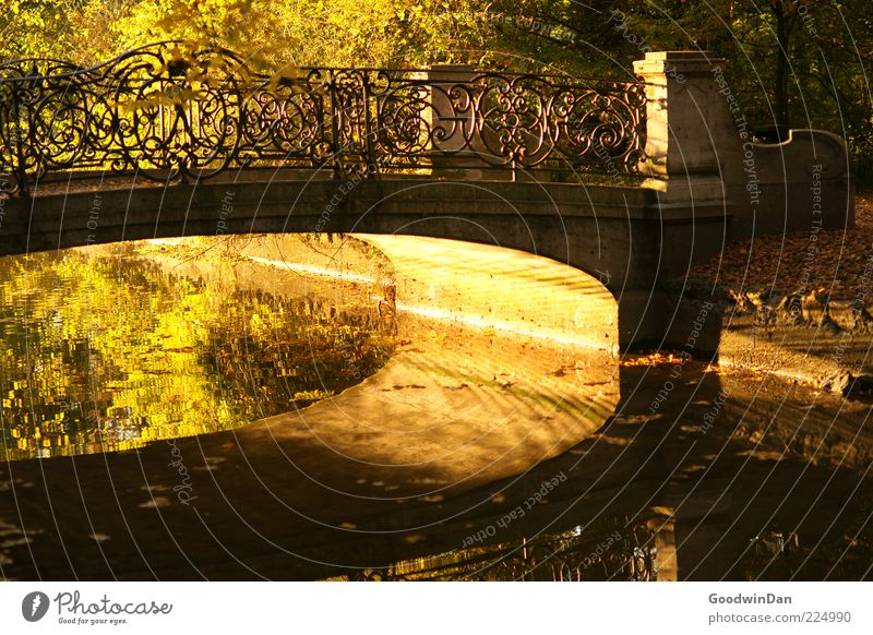 bridge magic Environment Nature Water Sunrise Sunset Sunlight Autumn Weather Beautiful weather Park Old Simple Wet Warmth Emotions Moody Colour photo