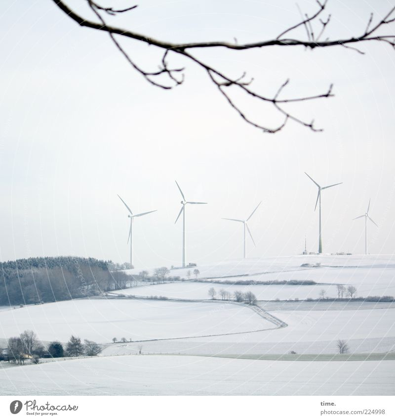 White Tree Winter Environment Landscape Snow Gray Bright Energy industry Branch Wind energy plant Twig Ecological Environmental protection Snowscape