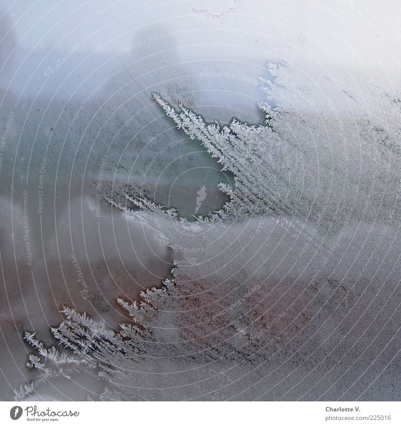 White Blue Winter Cold Snow Window Brown Ice Glass Frost Frozen Vantage point Transparent Window pane Crystal structure Bad weather