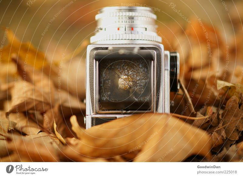 Nature Beautiful Leaf Autumn Environment Earth Fresh Wild Retro Authentic Elements Uniqueness Exceptional Camera Many Sharp-edged