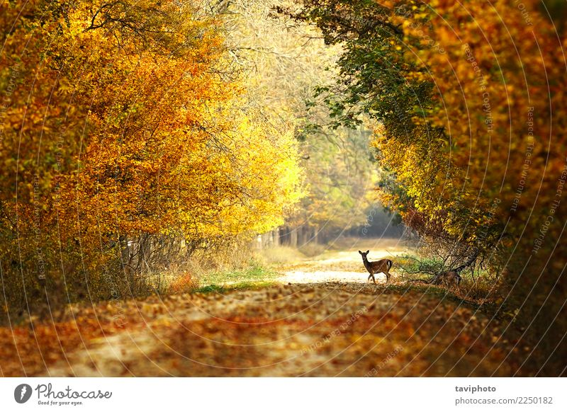 beautiful view of forest road Woman Nature Beautiful Landscape Tree Animal Forest Street Adults Yellow Autumn Lanes & trails Natural Playing Brown Wild