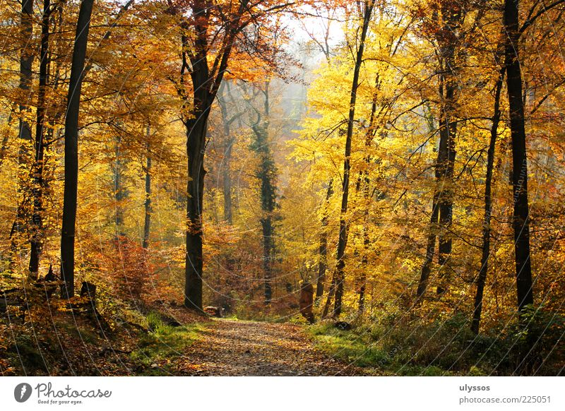 AutumnGold Relaxation Calm Trip Freedom Environment Nature Landscape Beautiful weather Tree Grass Bushes Leaf Foliage plant Yellow Uniqueness Joy Lanes & trails