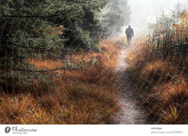man walks on forest path in fog and sunshine Vacation & Travel Human being Man Adults Nature Landscape Autumn Weather Fog Tree Grass Forest Street