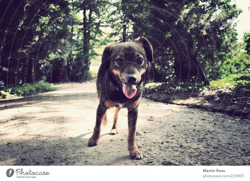 Cuckoo Dog Landscape Park Animal Pet 1 Looking Puppy Tongue Beautiful Interest Curiosity Cuddly Lanes & trails Loneliness Colour photo Exterior shot