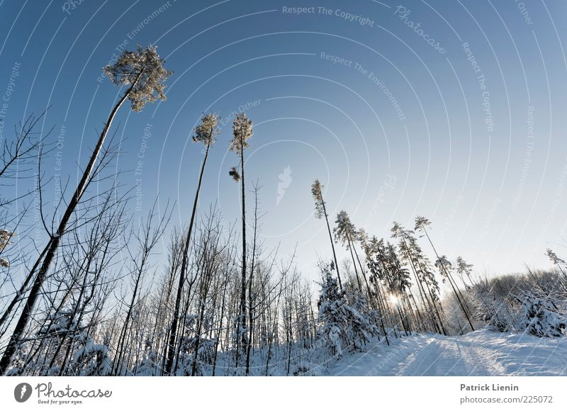 Sky Nature White Beautiful Blue Tree Plant Sun Winter Forest Snow Landscape Environment Air Weather Climate